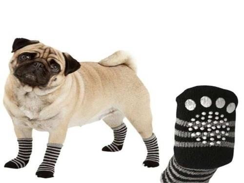 Tendencias en mascotas-3