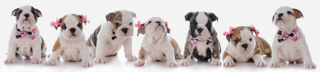 Tendencias en mascotas