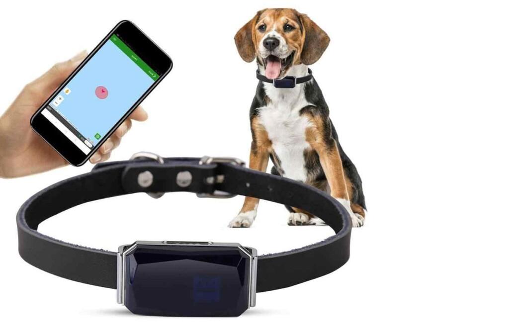 Tendencias para propietarios geek de mascotas-collar
