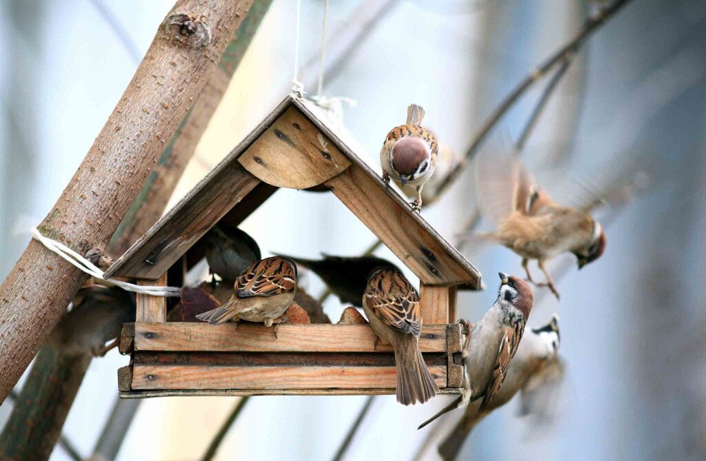 tendencias en jardines y jardineria-bird