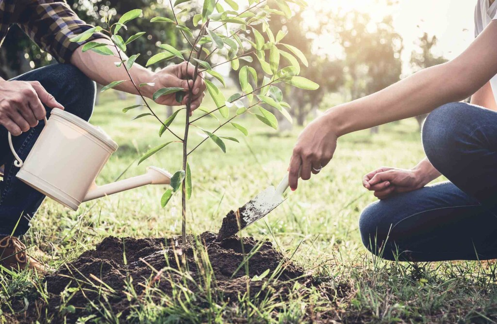 tendencias en jardines y jardineria-jardin forestal