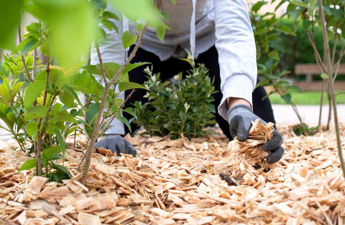 tendencias en jardines y jardineria
